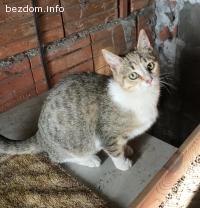 Котета за осиновяване