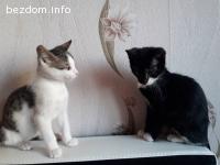 Подаряват се две котенца
