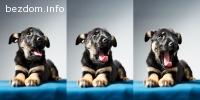 Двумесечно куче