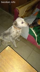 Женско сиво куче