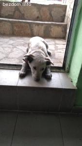 Подарявам кученца, майка Българско овчарско куче