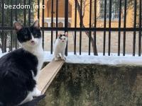 Търсят дом