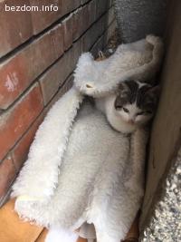 Две бездомни мъжки котенца търсят дом