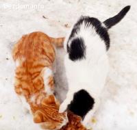 Котенца търсят дом
