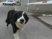 Изгубено куче на име Бари