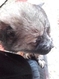спешно изхвърлени кученца зов за помощ