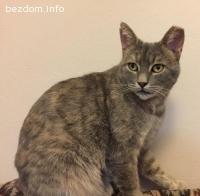 Изгубена котка - Сточна гара