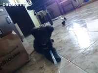 Малко кученце търси дом