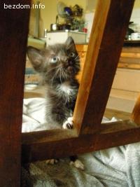 Малки котета