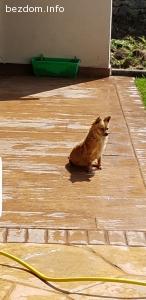 Изгубено куче