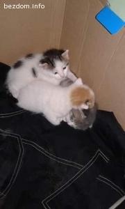 Подарявам две котета