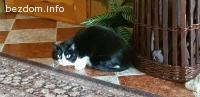Пет котета си търсят дом!