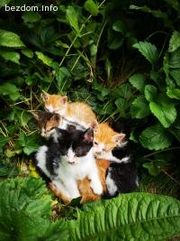 Болни котенца търсят своят спасител! :'(