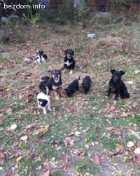 Сладки кучета си търсят добри стопани ❤️