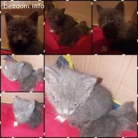 Подарявам котета в Пловдив