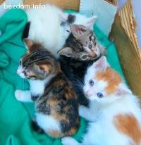 Подаряваме сладки котенца