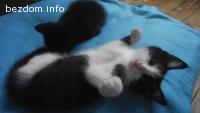 Котенце Зори
