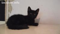 Две сладки черни котенца
