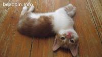 Котенце Жаклин
