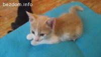 Котенце Алис