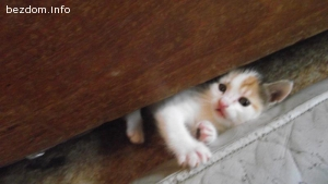 Котенце Дейзи