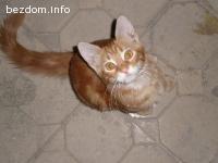Изгубен оранжев котарак в района на Витошка и Аспарух