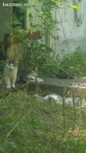 Три котенца си търсят дом