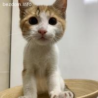 Коте Джули си търси дом