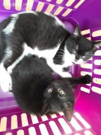 Подарявам сладки и игриви котета, на любящи и отговорни стоп