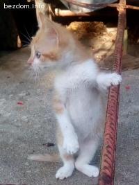 Малкият Лео предлага мъркане срещу гушкане и пълна паничка