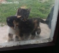 Котета в беда
