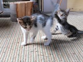 Котета търсят дом