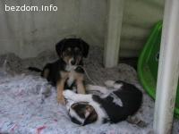 Две кученца търсят нов дом