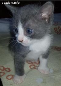 Подарявам сладки бебета котенца!