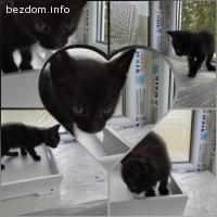 Подарявам котенце гр Варна