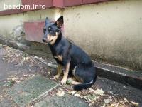 Изоставено или изгубено куче в Лозенец, близо до семинарията