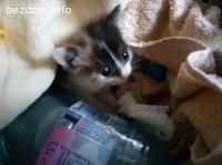 Намерено коте-бебе