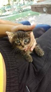 СПЕШНО се търси дом на това котенце
