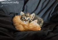 Подарявам прекрасни малки котета