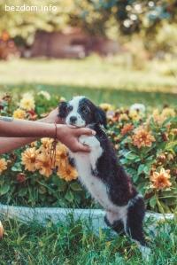 Панда търси отговорни стопани и много любов
