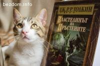 ОСИНОВЕН-Рицар с добро сърце - Еомер, коте търси дом и сърце