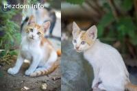 Шест котенца си търсят дом