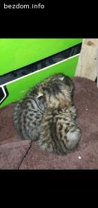 Изоставени новородени котенца