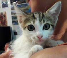 Коте във Варна