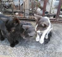Малки котета сирачета си търсят дом