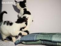 мили котенца