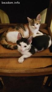 Две котета търсят осиновители и постоянен дом!