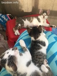 Котетата АБВ търсят дом