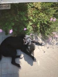 Спешно се подарява женско кученце