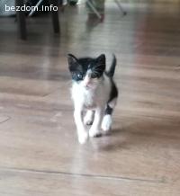 Търси се дом за малко котенце